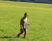 almabtrieb-2015_hochfeldernalm (25 von 332)