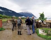Almauftrieb Obermieming - Feldereralpe 2016