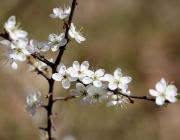 Frühlingserleben in Untermieming