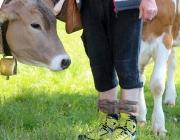 "Hat die Kuh Charakter? – ""Ja. Und – die Kuh vergisst nie"""