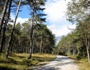 Mieminger Herbstwald – Der Goldene Herbst auf Abschiedstour