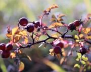 Herbstliches Barwies – Der Ort strahlt eine bunt angemalte Stille aus