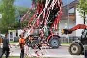 """Ein Baum wird """"Mai-Baum"""" – Wir begleiten die stattliche Fichte zum Fest"""