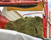Maisernte am Bauernhof Post in Obermieming