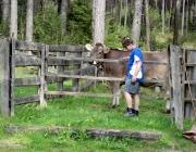 Viehauftrieb zum Vorberg der Marienbergalm – Auftakt zum Almsommer