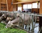 Milchprodukte vom Michelerhof