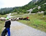 """Schafschoad 2017 Seeben Alm/Untermieming – """"Regen und Schnee im 20-Minuten-Takt"""""""