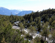 Steinblumen am Stöttlbach