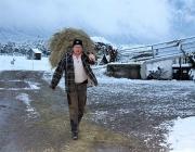 Wintereinbruch – Kühe auf der Flucht