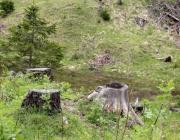 Zäunen auf der Biberwier-Alm