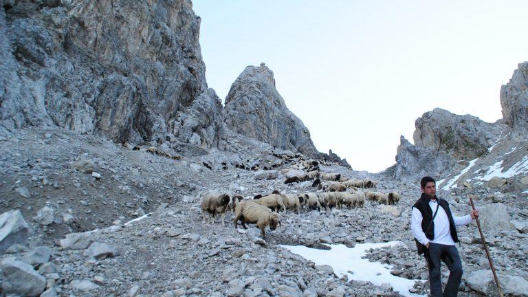 Der Schafabtrieb von der Seeben Alm nach Mieming wurde vom Seeben-Alm-Hirt Gerhard Wiggens und dem Schafbauern Dietmar Maurer angeführt. Foto: Michaela Maurer