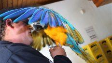 Papagei Coco war der Star am Sonntag. Foto: Knut Kuckel