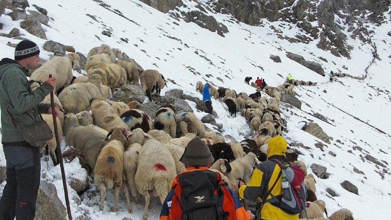Schnee machte den Weg über die Grünsteinscharte beschwerlich, Foto: Hermann Neuner