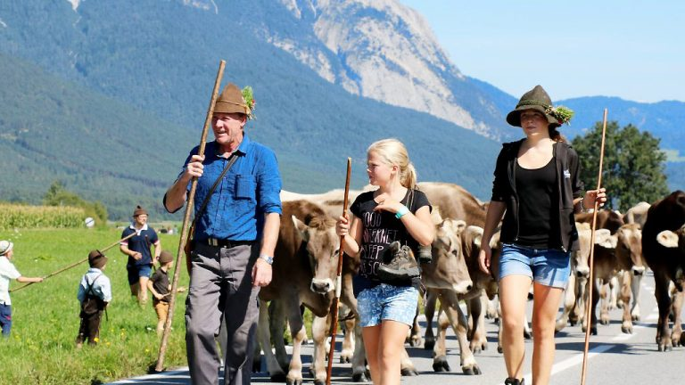 Kraftzehrender Almabtrieb - Applaus für die Hirten und ihr Vieh, Foto: Knut Kuckel