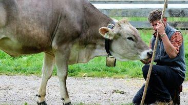 Feldernalmhirt Martin Reich beim Vorberg-Auftrieb im Mai, Foto: Knut Kuckel