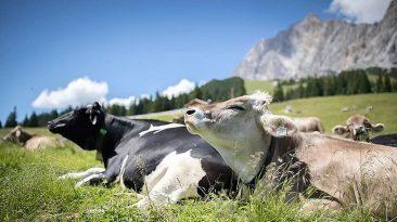 Uns gehts gut, auf der Hochfeldern Alm, Foto: Jörg Mette