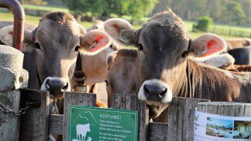 Wanderer werden auf ihrem Weg über Almwiesen um die Einhaltung ein paar grundsätzlicher Regeln gebeten. Foto: Knut Kuckel
